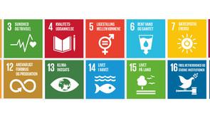 Bæredygtighed i 'glokal' uddannelse