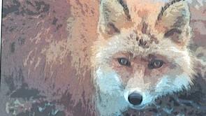 Naturens mangfoldighed - følg ræven